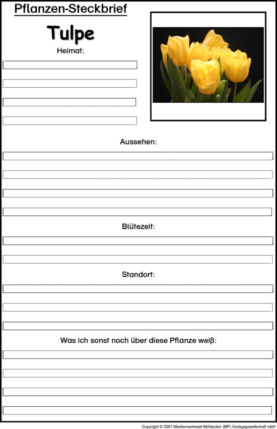 Kennenlernen steckbrief whatsapp