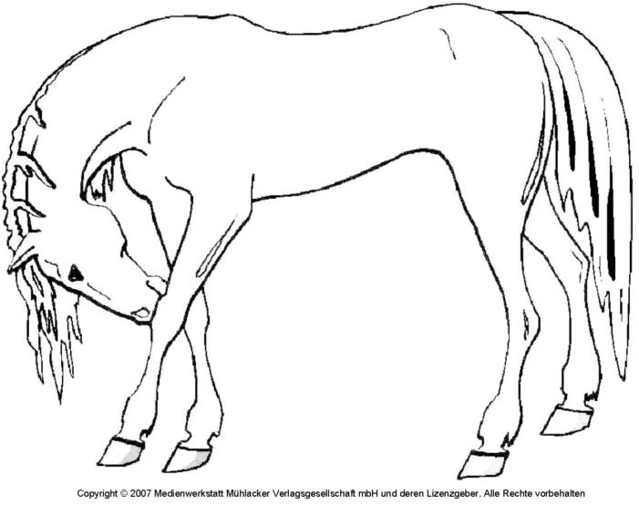 Nett Pferdekopf Malvorlagen Zum Ausdrucken Fotos - Malvorlagen-Ideen ...