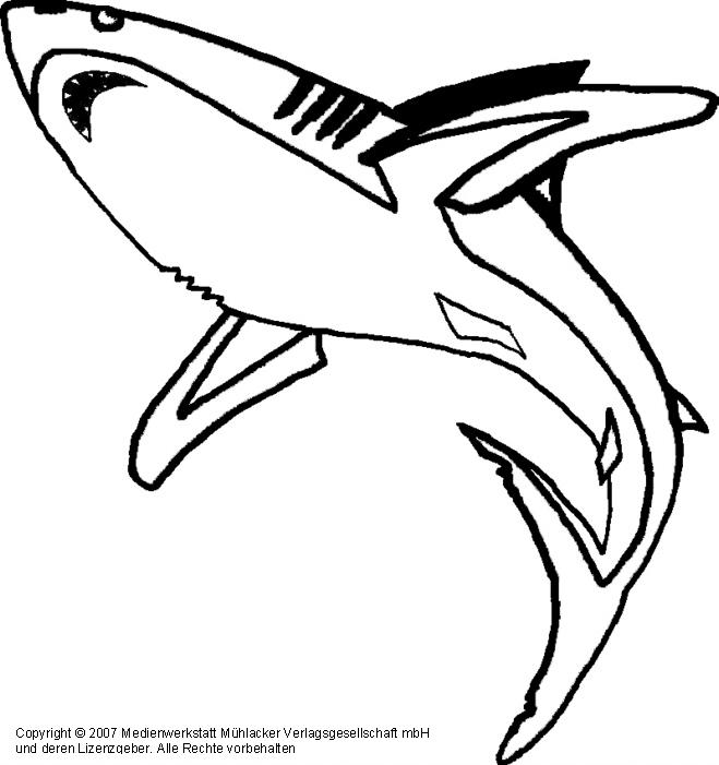 Großzügig Hai Bilder Zum Ausmalen Und Drucken Galerie - Ideen färben ...