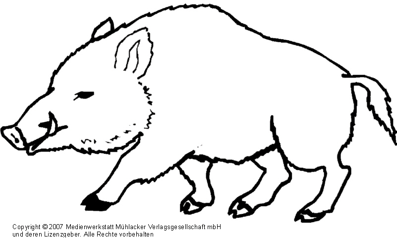 wildschwein  medienwerkstattwissen © 20062021