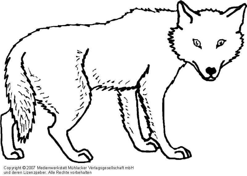 Wolf 1 Medienwerkstatt Wissen 2006 2017 Medienwerkstatt