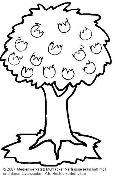 ausmalbilder  apfelbaum  medienwerkstattwissen © 2006