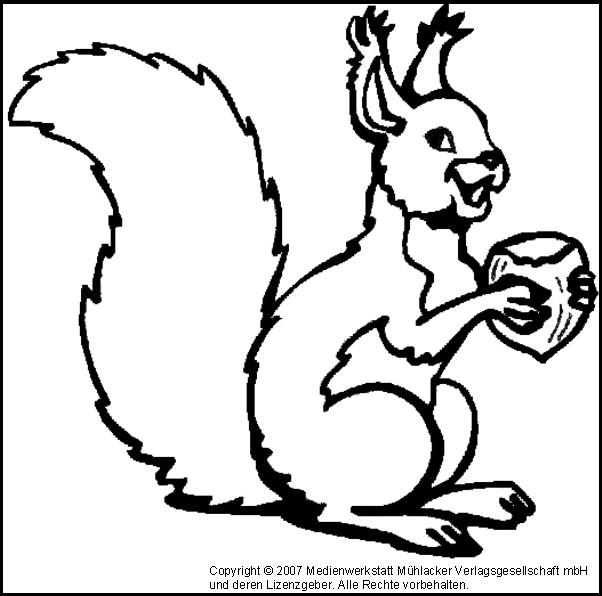 ausmalbild eichhörnchen 2  medienwerkstattwissen © 2006