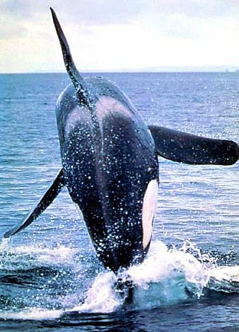 online casino gründen orca auge