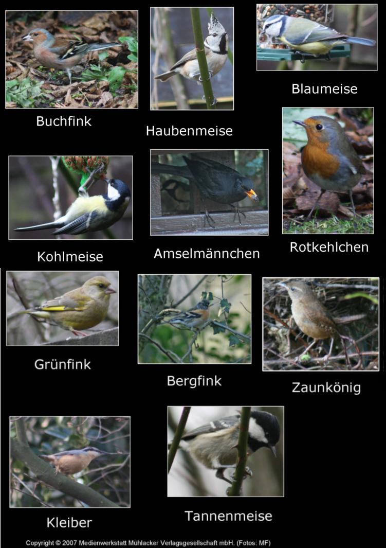 Vogel quiz kennst du diese vögel