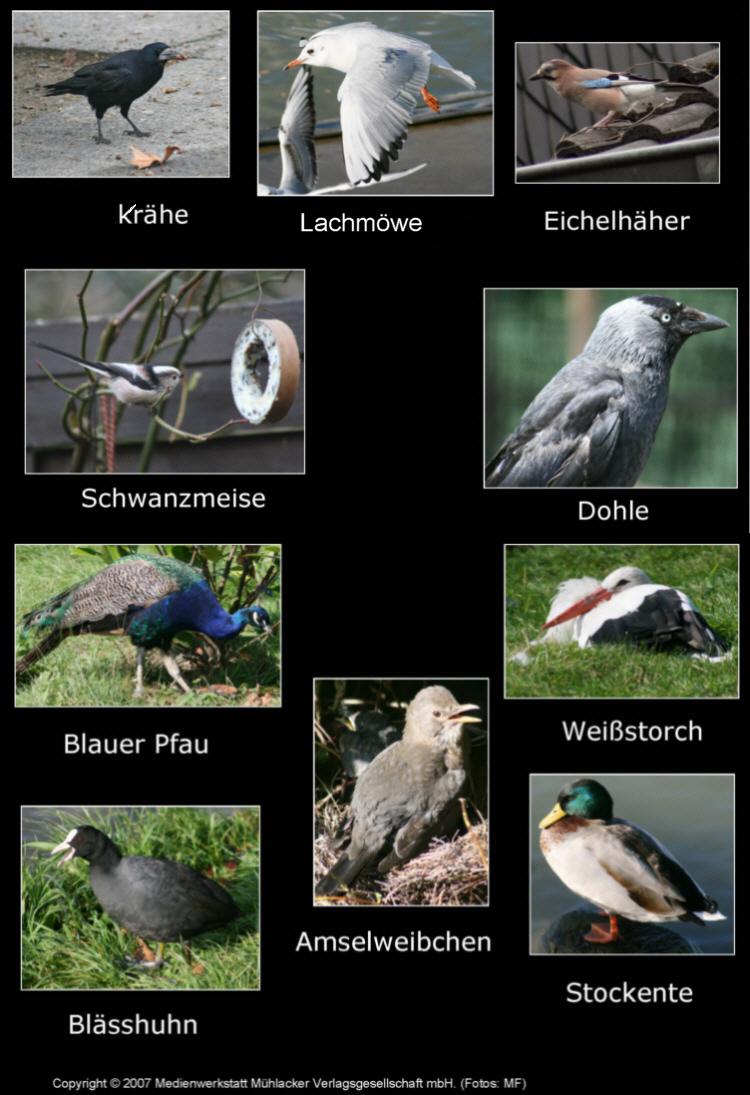 Vogel Quiz