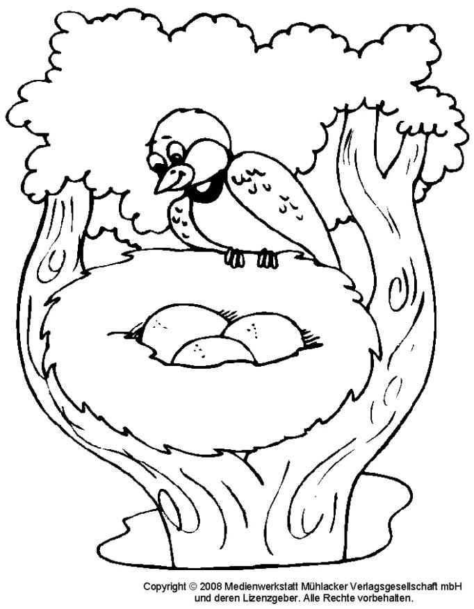 Ausmalbild vogel nest