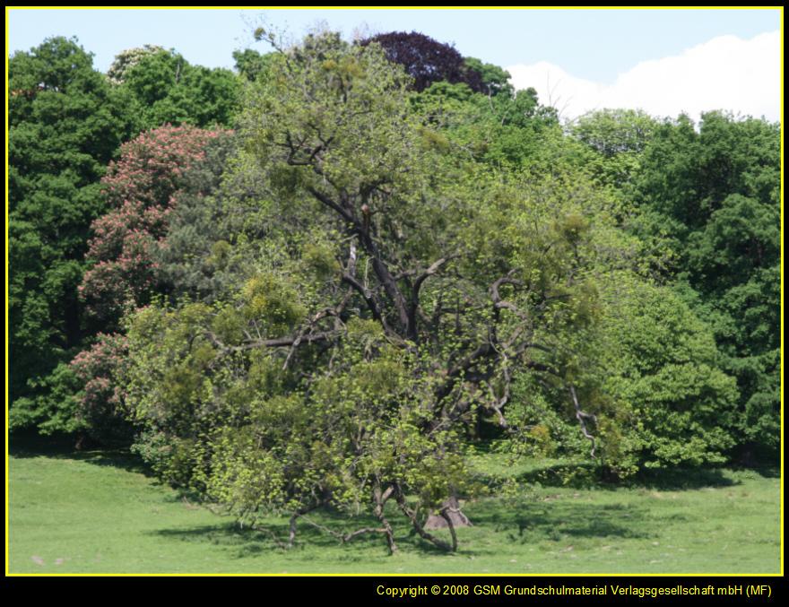 """Der berühmte dichter hermann hesse hat einmal gesagt: """"bäume sind"""