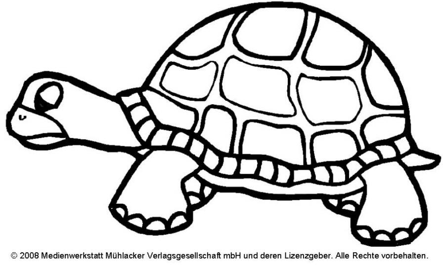 Ziemlich Bilder Von Schildkröten Zu Malen Ideen - Beispiel ...