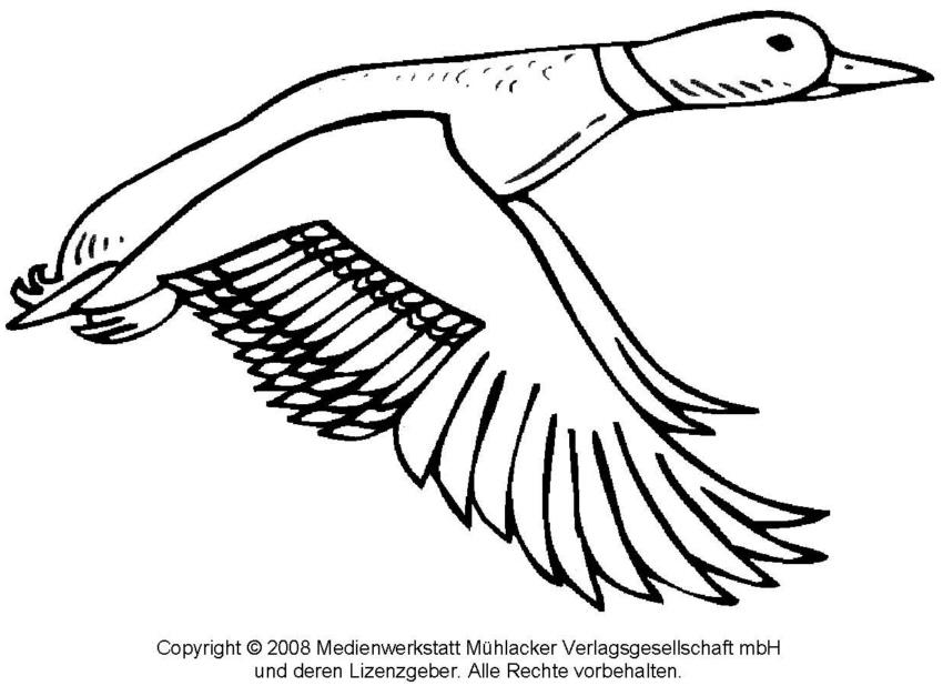 Ausmalbild: Ente 2 - Medienwerkstatt-Wissen © 2006-2017 Medienwerkstatt