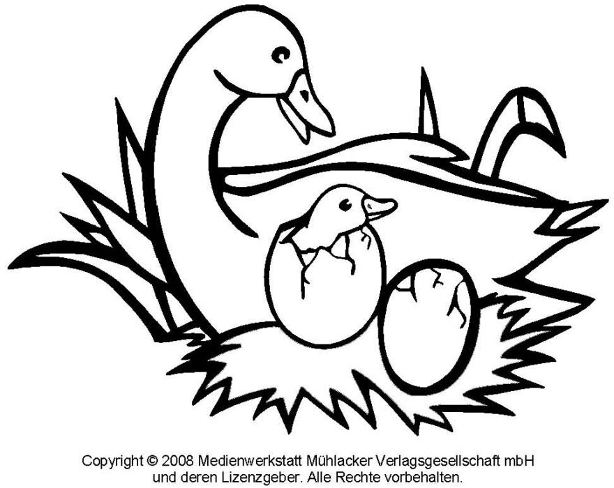 Ausmalbild: Gans 1 - Medienwerkstatt-Wissen © 2006-2017 Medienwerkstatt