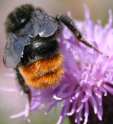 Bestäubung von Blüten durch Insekten - Medienwerkstatt-Wissen © 2006 ...