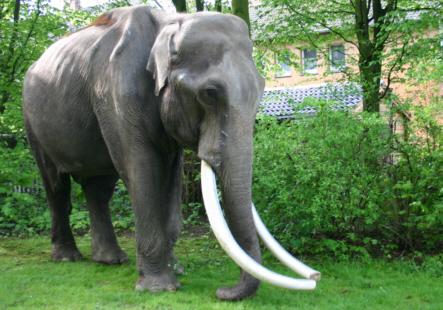 Indischer Elefant Besuch Auf Einem Schulhof