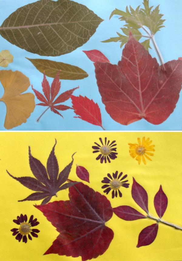 Blätter Pressen schülerarbeiten bunte herbstblätter pressen und laminieren