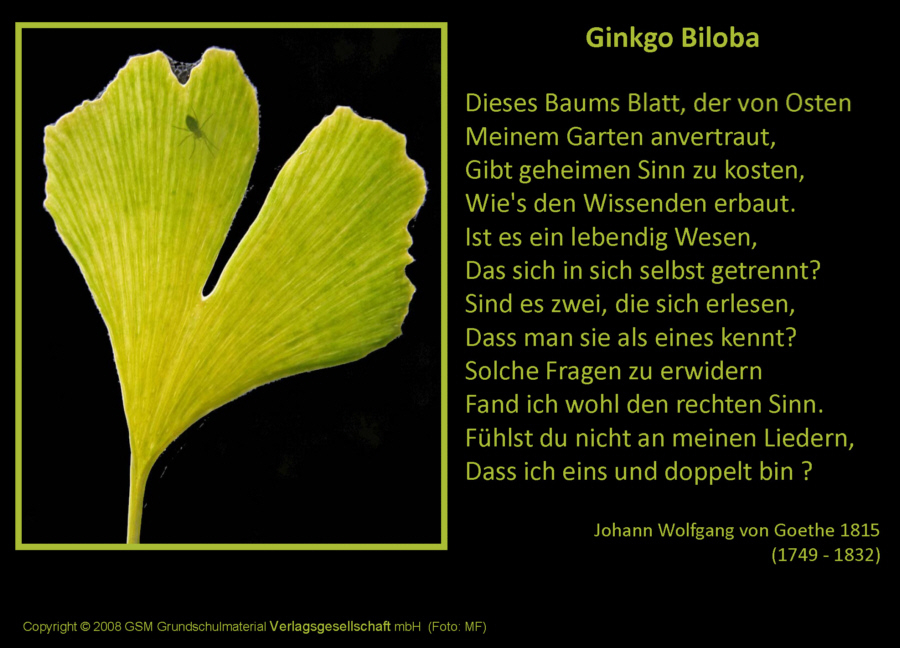 ginkgo biloba gedicht von johann wolfgang von goethe medienwerkstatt wissen 2006 2017. Black Bedroom Furniture Sets. Home Design Ideas