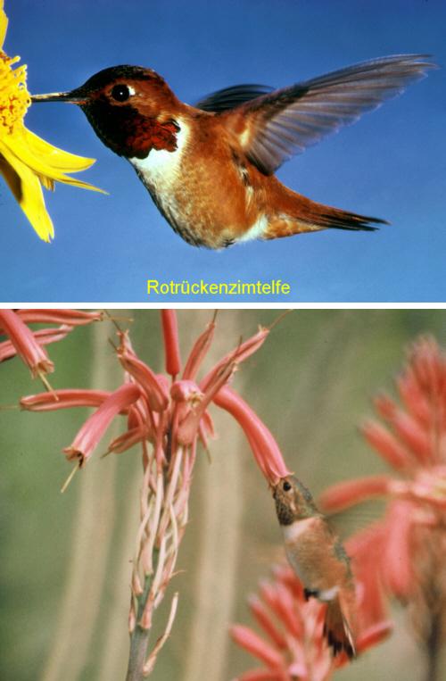 tiere niedrigere klassifizierungen