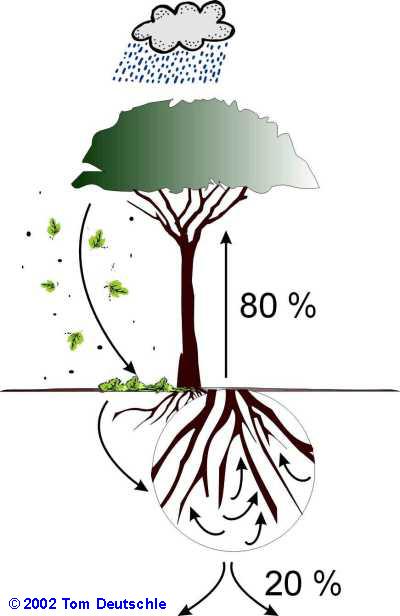 Kosystem regenwald der stoffkreislauf medienwerkstatt for Definition von boden