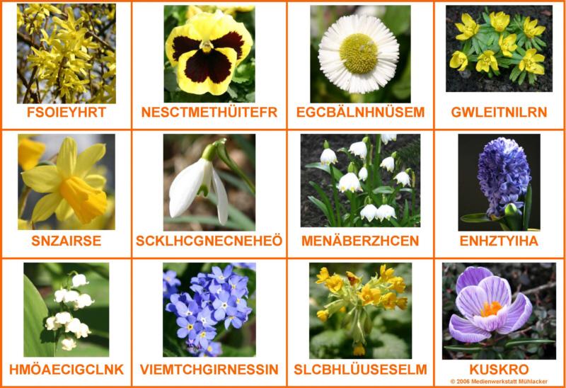 Blumennamen richtig schreiben - Medienwerkstatt-Wissen