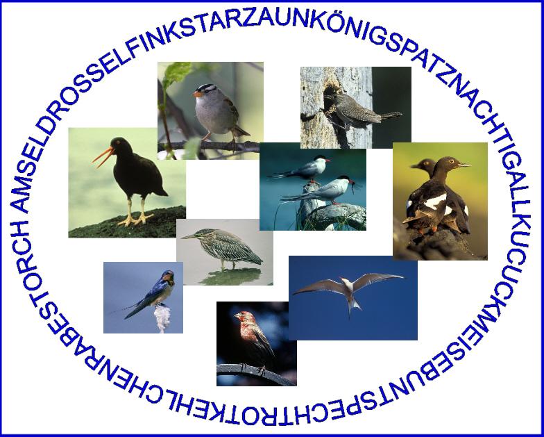 Findest du alle namen der vögel sie stimmen nicht mit den fotos