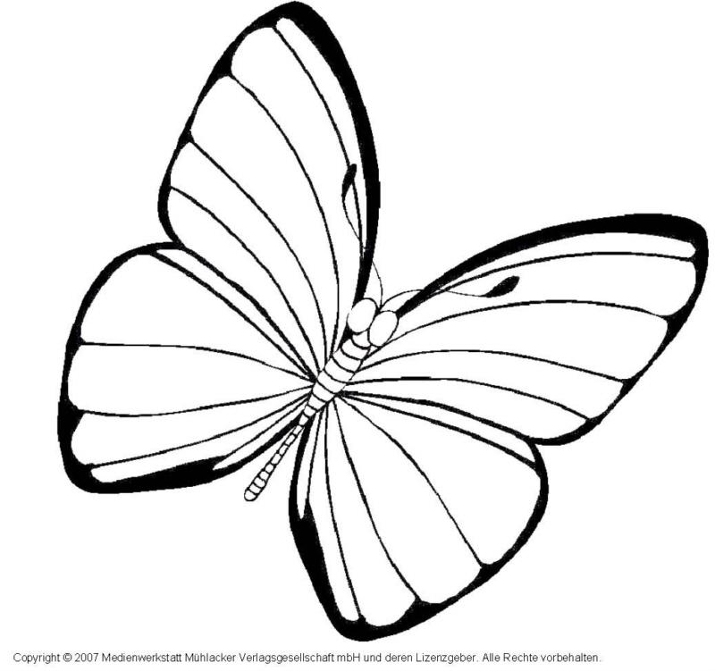 Schmetterling 6 - Medienwerkstatt-Wissen © 2006-2017 Medienwerkstatt