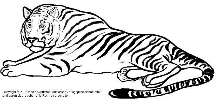 Tiger 2 Medienwerkstatt Wissen 2006 2017 Medienwerkstatt