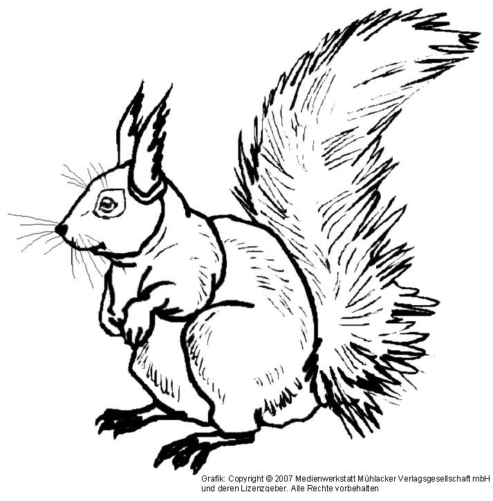 eichhörnchen 2  medienwerkstattwissen © 20062017