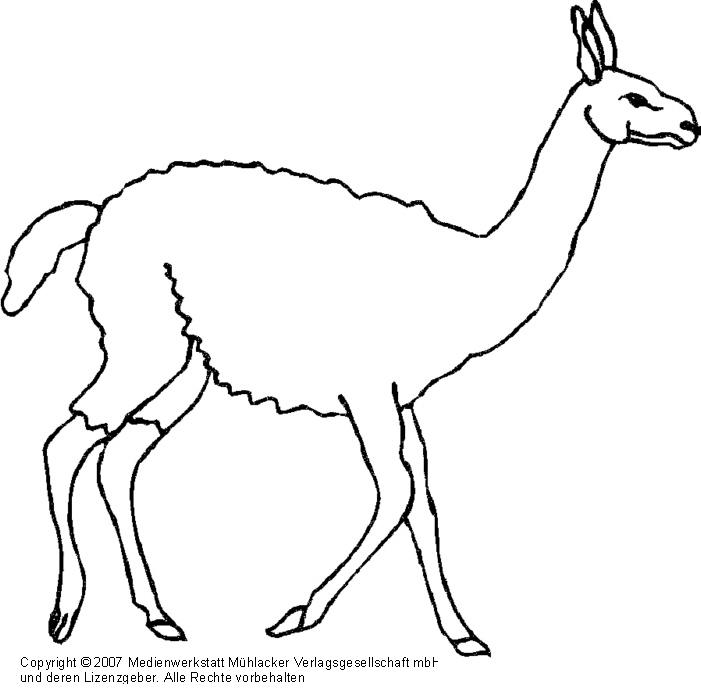 bilder zum ausdrucken lama ein lama zum ausmalen