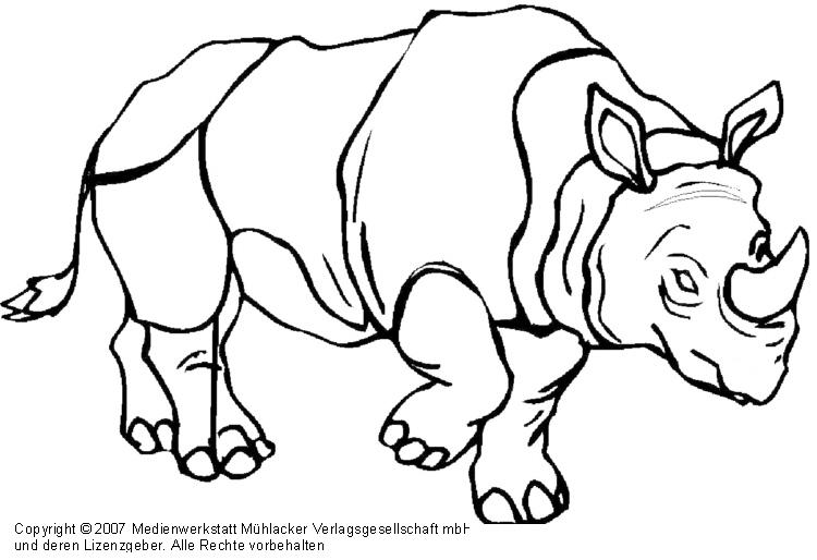 Nashorn Medienwerkstatt Wissen 2006 2017 Medienwerkstatt