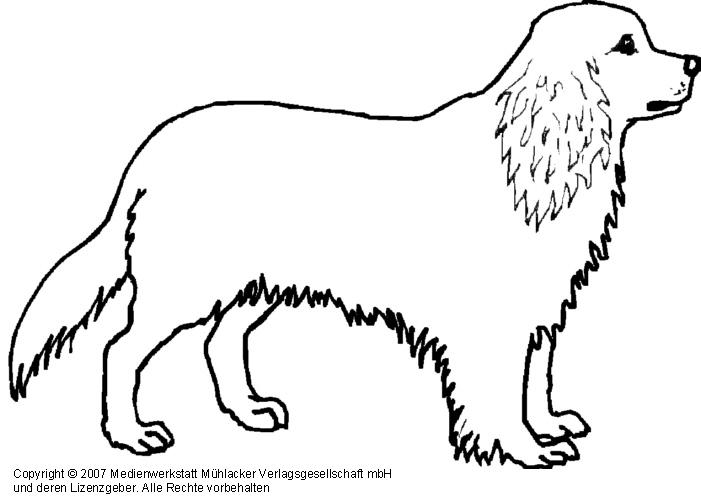 Diverse Hunde 1 Medienwerkstatt Wissen C 2006 2017 Medienwerkstatt