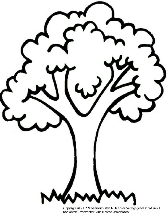Baum 1 Medienwerkstatt Wissen 2006 2017 Medienwerkstatt