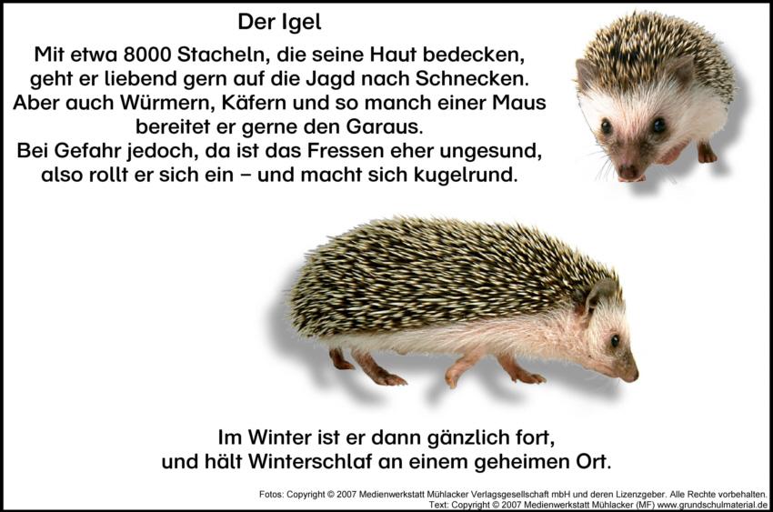 Gedicht Der Igel Medienwerkstatt Wissen 2006 2017