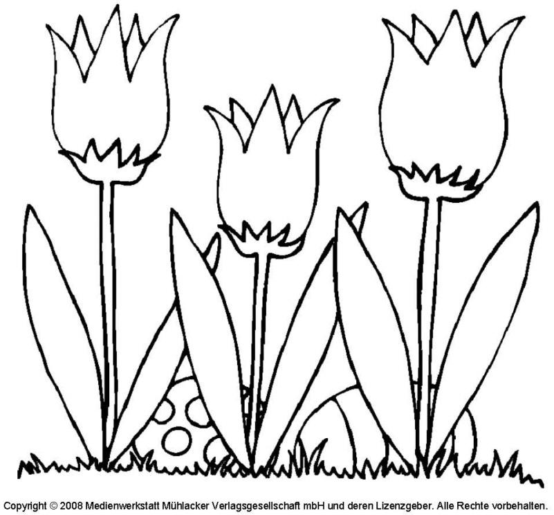 ausmalbild  tulpe 1  medienwerkstattwissen © 20062021