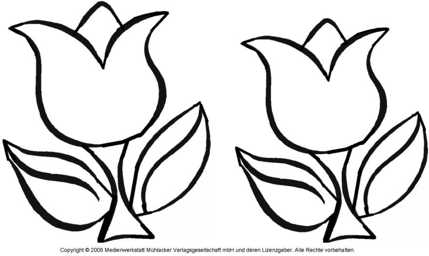 ausmalbild  tulpe 4  medienwerkstattwissen © 20062021