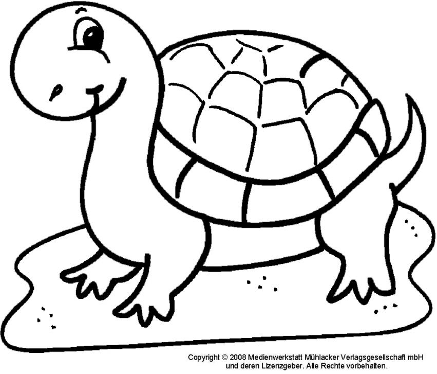 ausmalbild schildkröte  medienwerkstattwissen © 2006