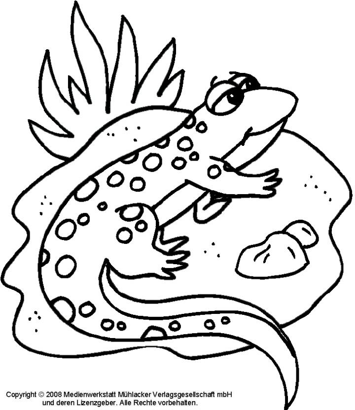 ausmalbild salamander  medienwerkstattwissen © 20062021