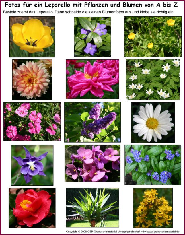 Leporello: Blumen und Pflanzen von A bis Z - Fotos