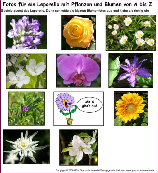 leporello blumen und pflanzen von a bis z  fotos