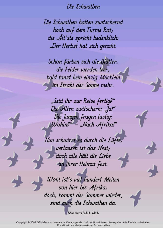 Die Schwalben Julius Sturm Medienwerkstatt Wissen 2006