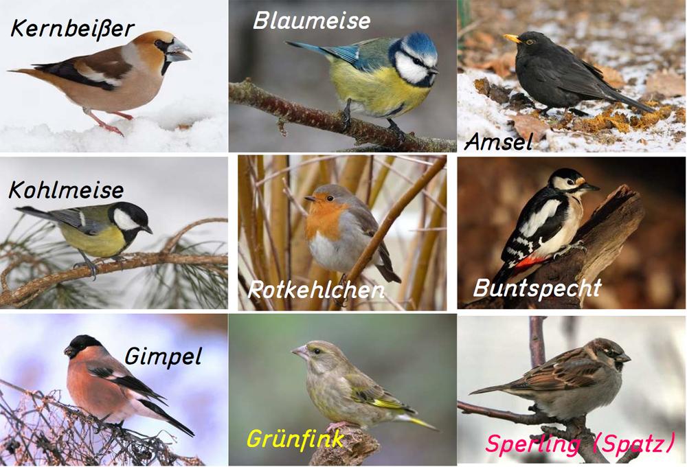 Die Bekanntesten Wintervögel Am Futterhaus Medienwerkstatt Wissen