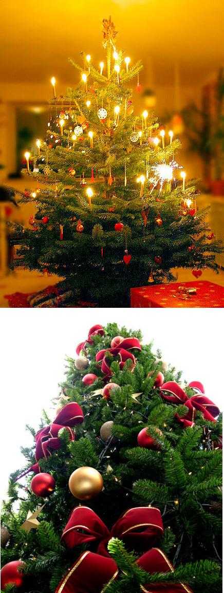 Ursprung Weihnachtsbaum.Zur Geschichte Des Weihnachtsbaums Medienwerkstatt Wissen 2006