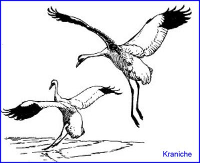 Skelett, Körperbau und Organe eines Vogels - Medienwerkstatt-Wissen ...