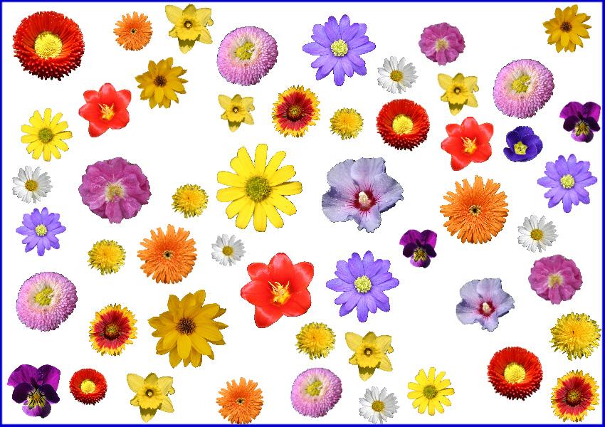 Frühlingsrätsel Blumen Startkarte 1 Medienwerkstatt