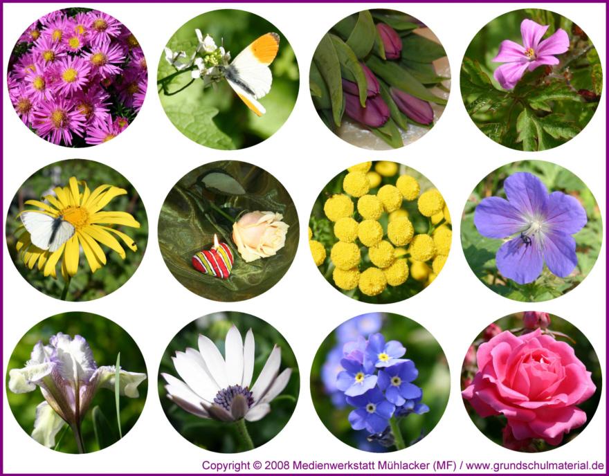 Lesezeichen Kleine Blumenfotos Zum Ausdrucken