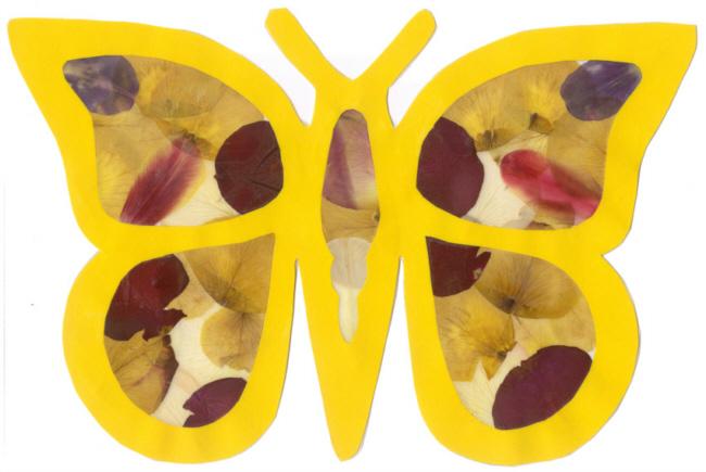 Bildergebnis Fur Schmetterlinge Vorlage Zum